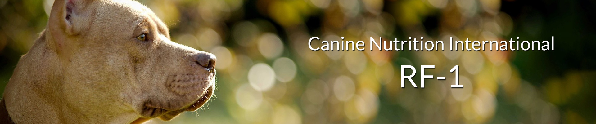 Canine Nutrition International